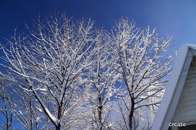 DPP0 668 047 青空と雪化粧の木0443