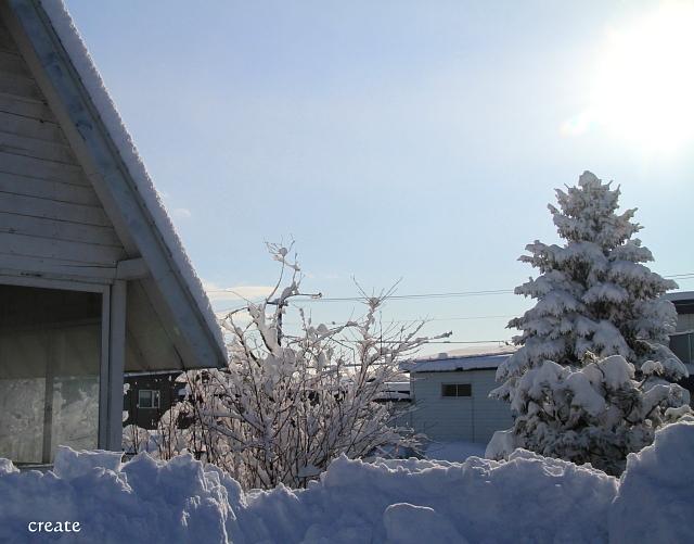 DPP0 668 045 クリスマスツリー0443