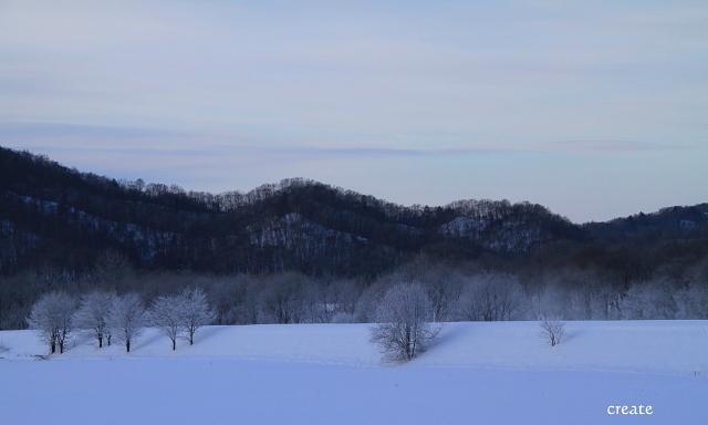 DPP0 668 130 雪原と樹氷0443