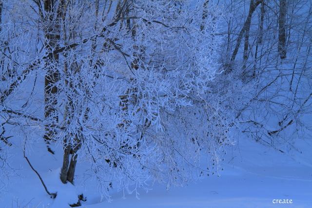 DPP0 668 198枝の隅々まで樹氷0443
