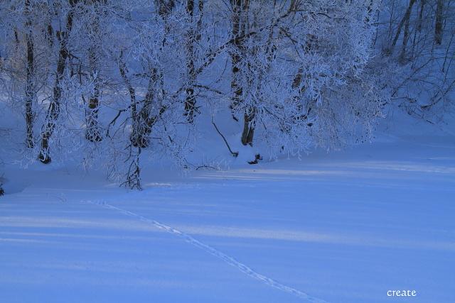 DPP0 668 227樹氷と足跡0443