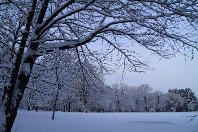 DPP0 668 006  雪景色0443