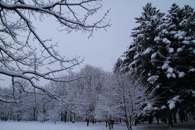 DPP0 668 045  松と雪のモノトー0443