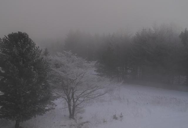DPP_152 霧の中0001