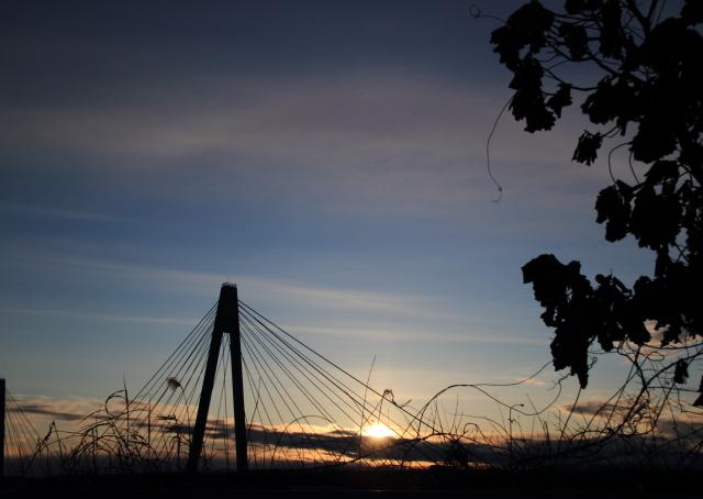 DPP_250 白鳥大橋と蔦0001