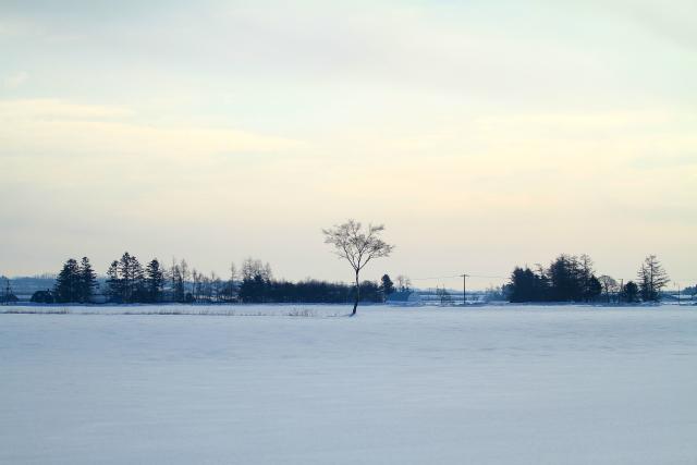 DPP_063 一本の木0001