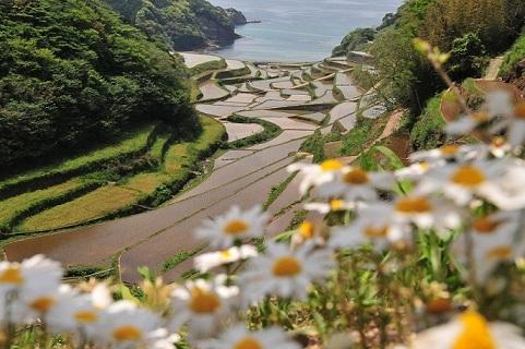 棚田と海04