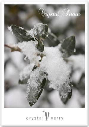 crystal-verry* クリスタルベリー *・オーナーのブログ・*-クリスタルベリー 雪