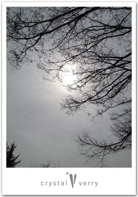 crystal-verry* クリスタルベリー *・オーナーのブログ・*-世田谷公園