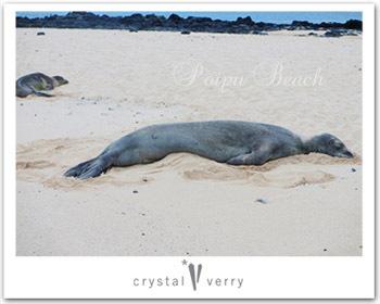 crystal-verry* クリスタルベリー *・オーナーのブログ・*-カウアイ ポイプビーチ クリスタル ベリー