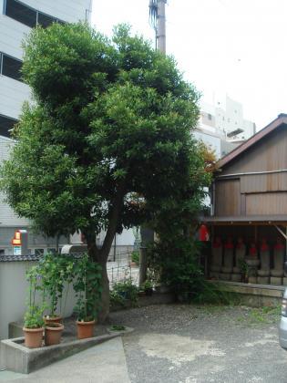 大安寺境内の樹木