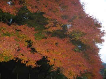 もみじ 嵐山