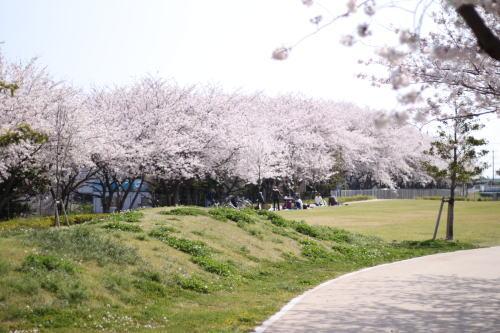 桜を見に‥①