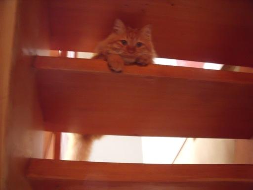 20120525階段猫