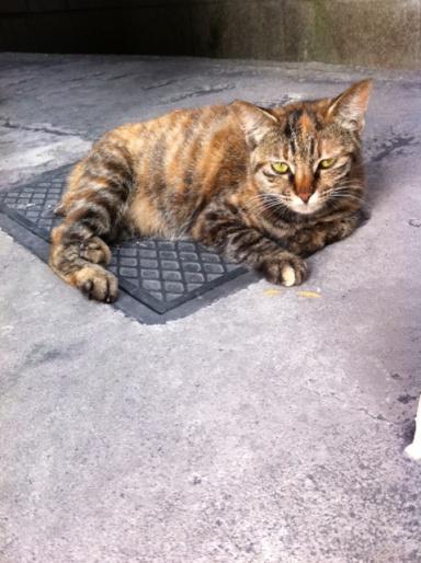 20120531先日のビルの猫01