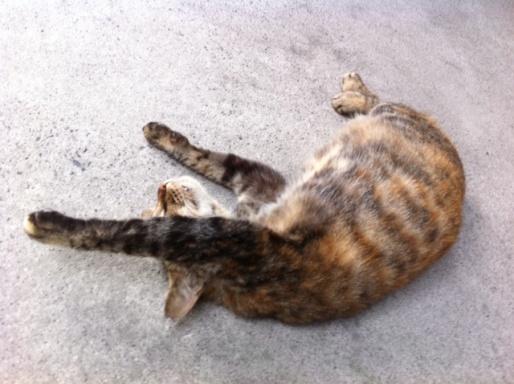 20120619ビルミケ猫06