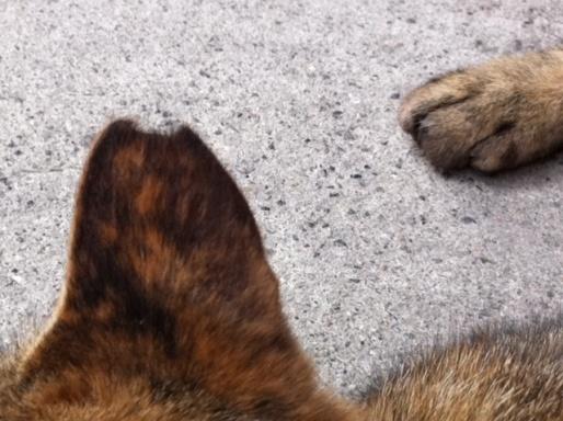 20120619ビルミケ猫12