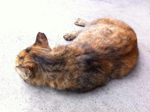 20120619ビルミケ猫15