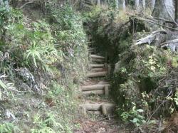 登山口から山頂までは ずっと急登