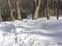 雪の量は多いです