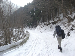 大又林道を行く