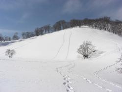 前山の雪は いい雪でした!