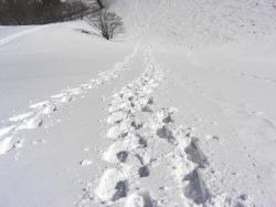 前山 自分の歩いたシューの跡