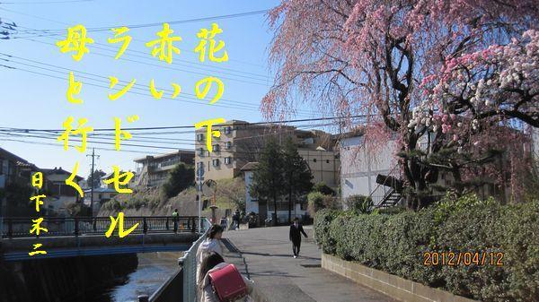 0412sakura05