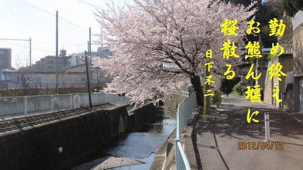 0412sakura06a