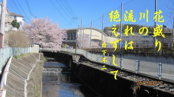 0412sakura07