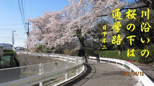 0412sakura08