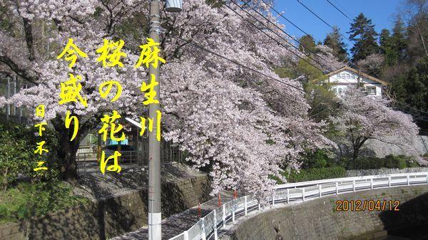 0412sakura09