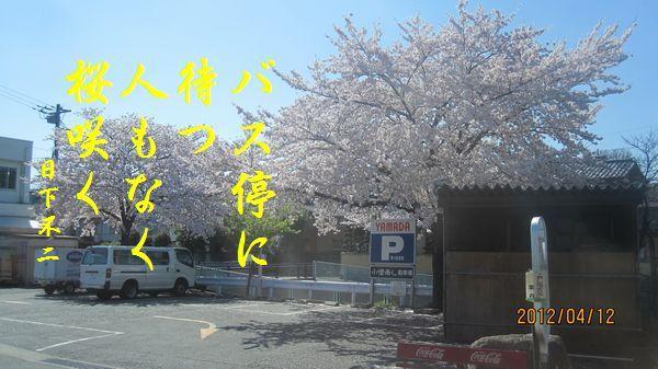 0412sakura10