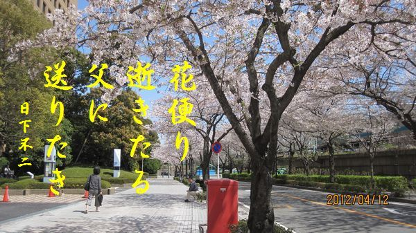 0412sakura19