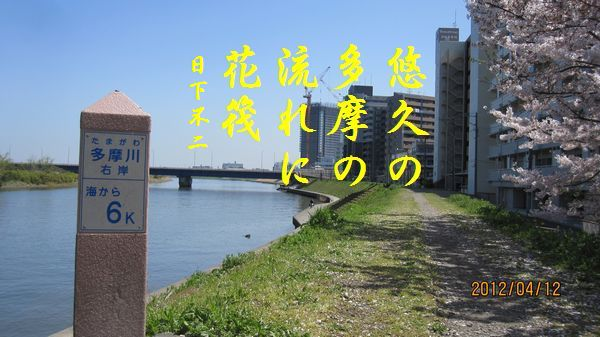 0412sakura23