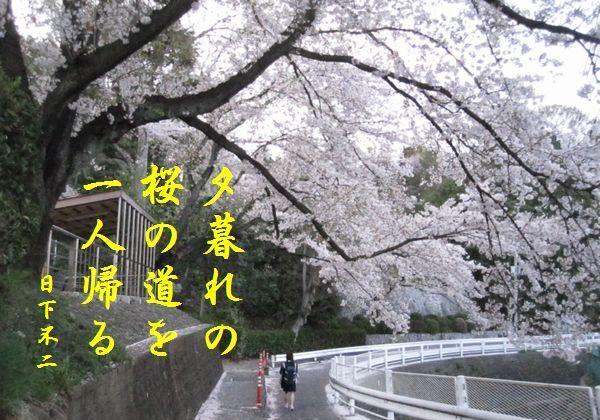 0412sakura30