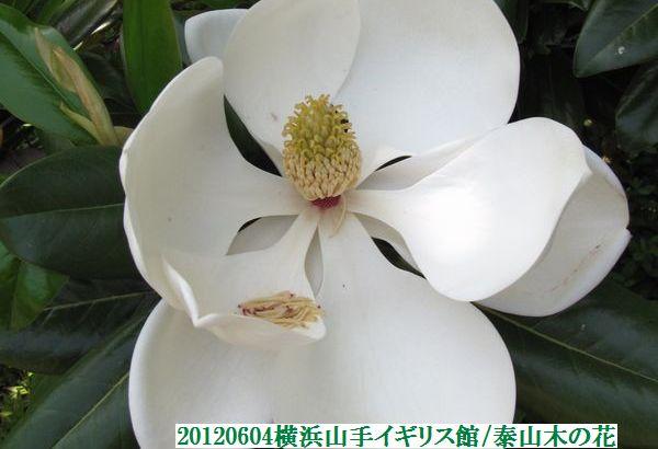 0604flower11