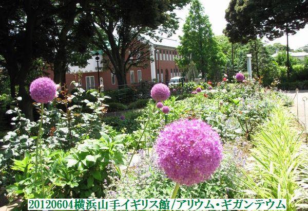 0604flower13