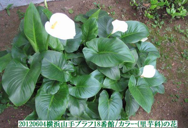 0604flower14