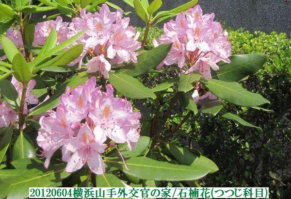 0604flower15