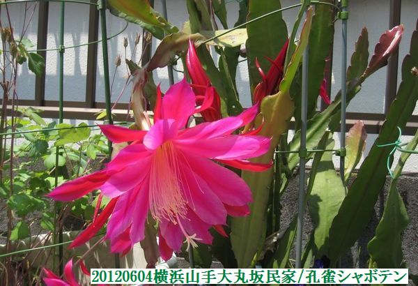 0604flower17