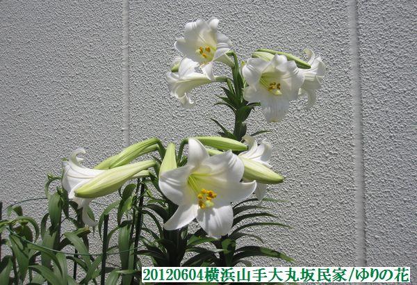 0604flower18