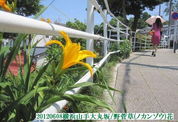 0608flower01
