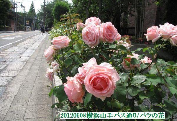 0608flower03