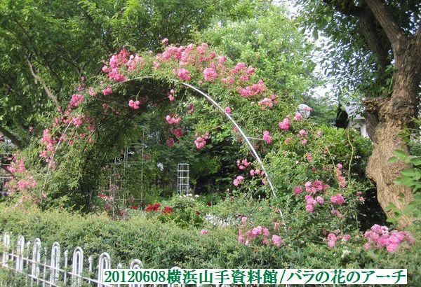 0608flower05