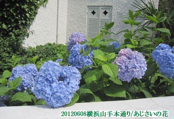 0608flower06