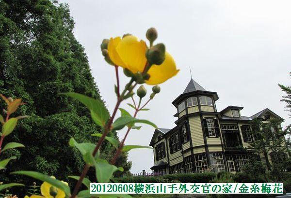 0608flower07