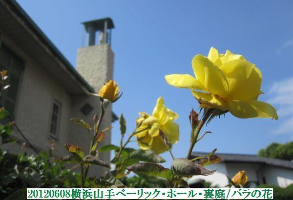 0608flower08