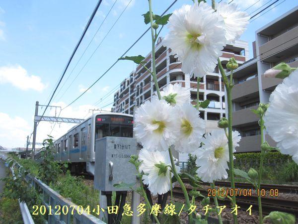 0704flower01