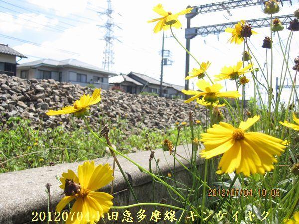 0704flower02
